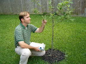 Tree Selection & Planting